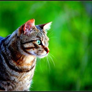 IMG 4565 300x300 Fotografia: NATURA