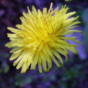 In giallo 300x300 Fotografia: NATURA