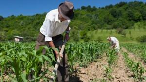 wpid trattore agricoltura campagna contadino natura 535x300 300x168 Lorto fai da te e i microallevamenti tra i segreti della longevità