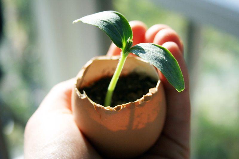 wpid themagnifyingglass Bambini nella natura: realizzare un semenzaio