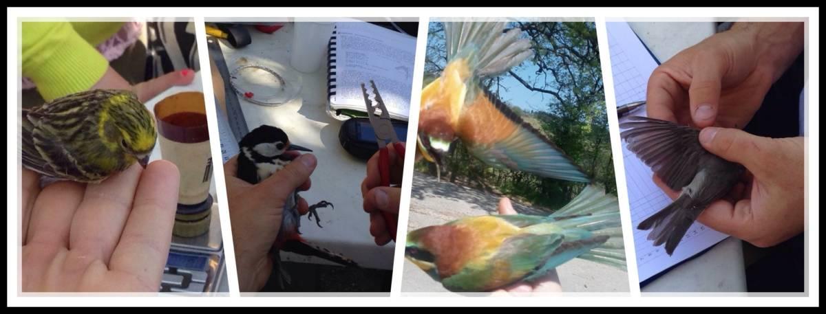 718d0b54 4a2e 40d6 acd2 3f43a6661706 5 settembre Lanello che racconta Censimento e conoscenza degli uccelli