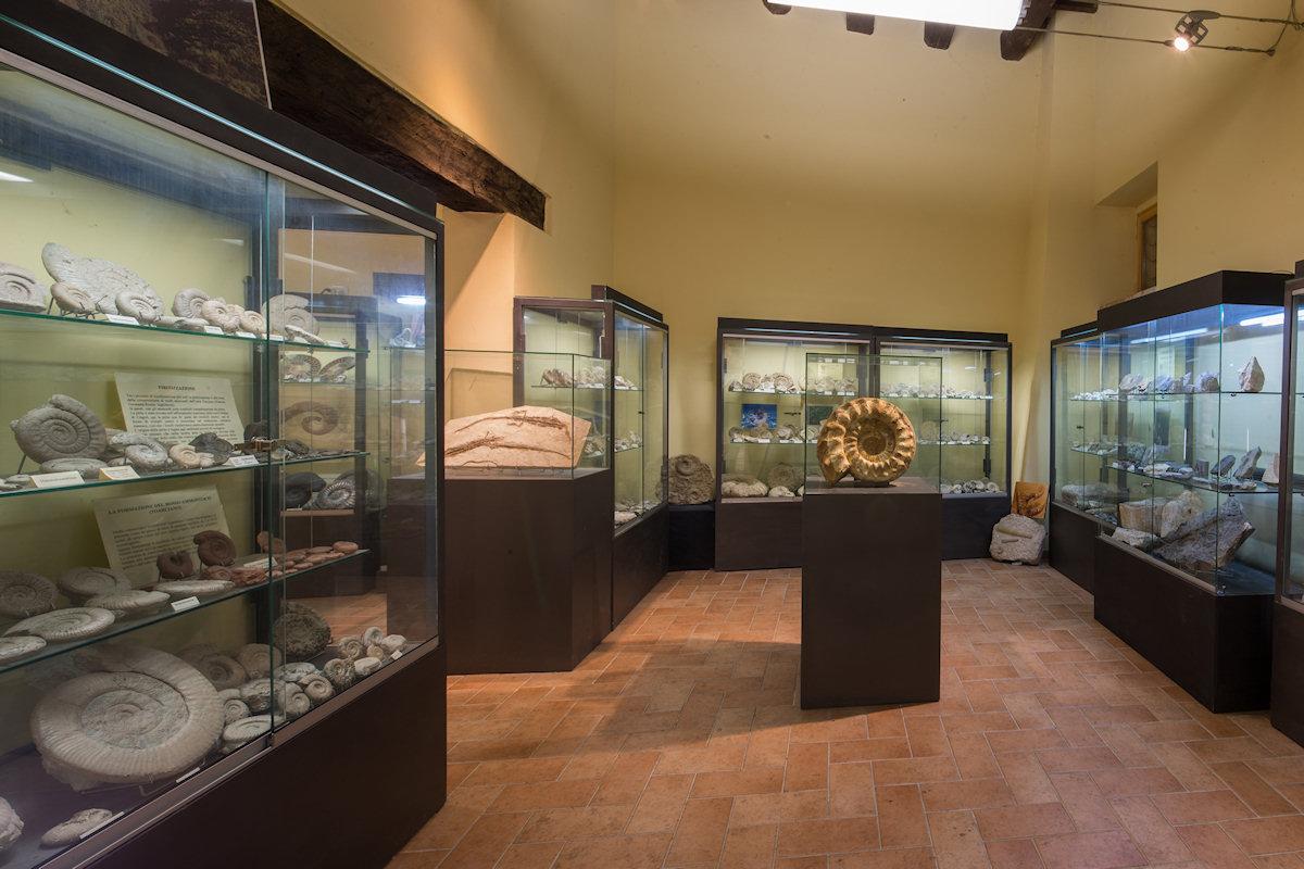 fossili3 Museo di storia naturale di Gagliole. Educare scoprendo