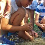 20170630 083543 150x150 I bambini e la natura   Centro Estivo 2017