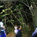 IMG 8090 150x150 Halloween Nel Bosco 2017   Gallery
