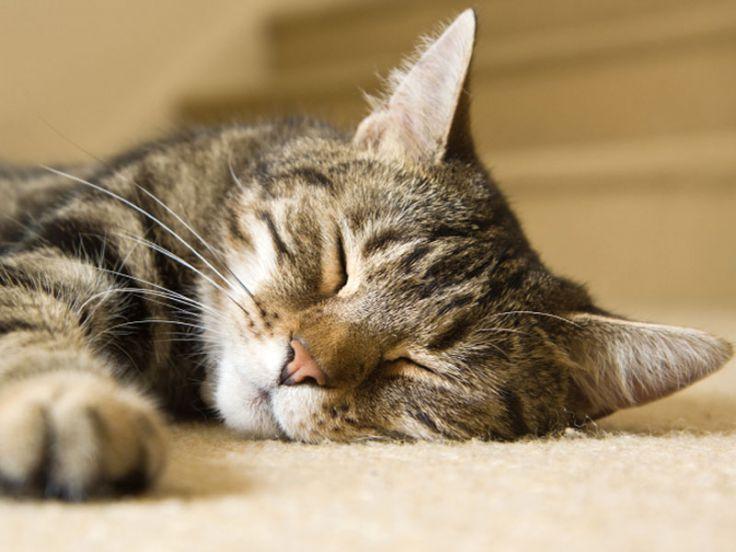 gatto che dorme Regole per un buon sonno