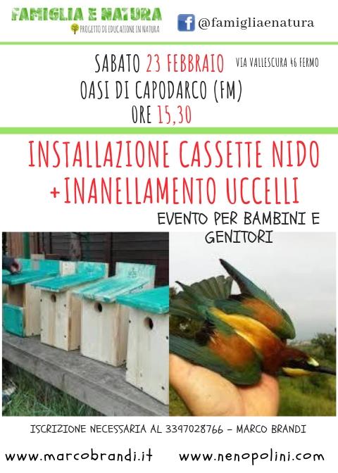 CASSETTE NIDO Installazione Cassette Nido + Inanellamento